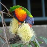 Australia2013 253